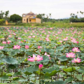 Beautiful flowers in Hoi An