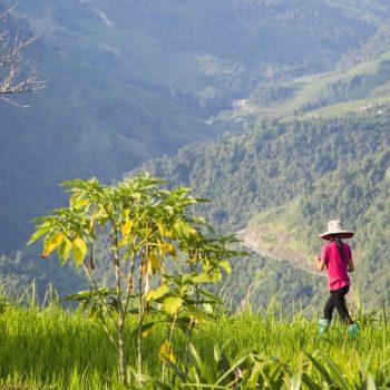 Mountains-Sapa-Vietnam-farmer